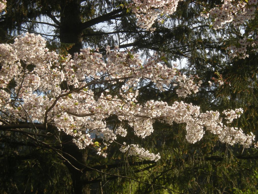 Close-up Blossoms